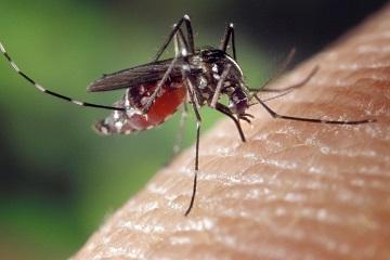 1001 quan điểm sai lầm về việc phòng chống muỗi