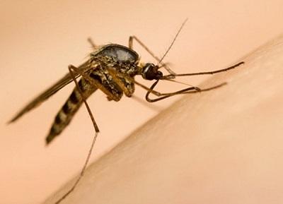4 bệnh truyền nhiễm từ muỗi và cách phòng tránh