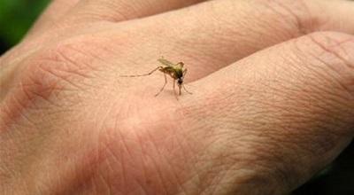 5 lý do khiến một số người bị muỗi đốt nhiều hơn người khác