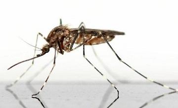 Bảo vệ mình trước các loài côn trùng nguy hiểm