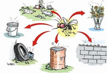 Biện pháp chống muỗi và côn trùng hiệu quả