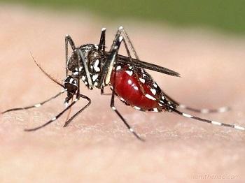 Các quan niệm sai lầm về phòng chống muỗi