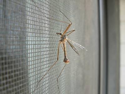 Cách chọn cửa lưới chống muỗi và côn trùng phù hợp của bạn