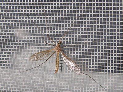 Cách vệ sinh cửa lưới chống muỗi cho mọi nhà