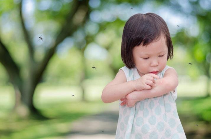 Chữa trị cho bé khi bị côn trùng cắn đốt