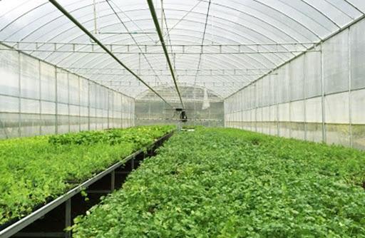 Cửa lưới chống muỗi cho nhà vườn