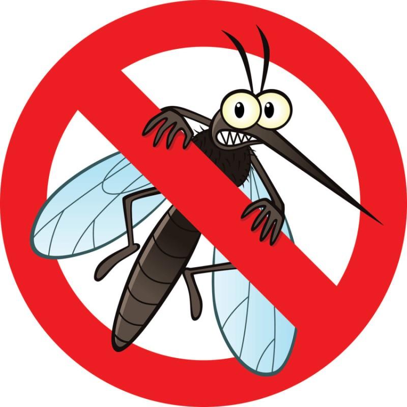Cửa lưới chống muỗi giải pháp chống muỗi và côn trùng vào nhà hiệu quả