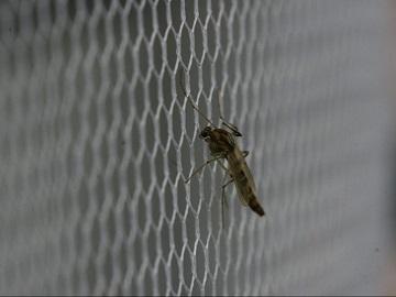 Cùng điểm qua những loại cửa lưới chống muỗi