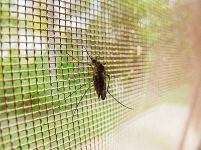 Địa chỉ chuyên cung cấp cửa lưới chống muỗi cố định