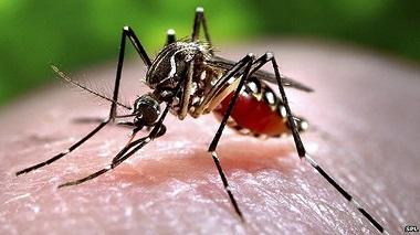 Đuổi muỗi mùa mưa là nỗi quan tâm của bao người