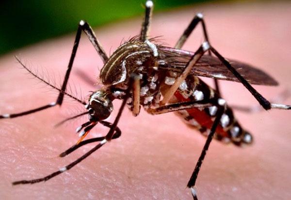 Làm thế nào để thoát khỏi muỗi, tránh xa bạn và gia đình