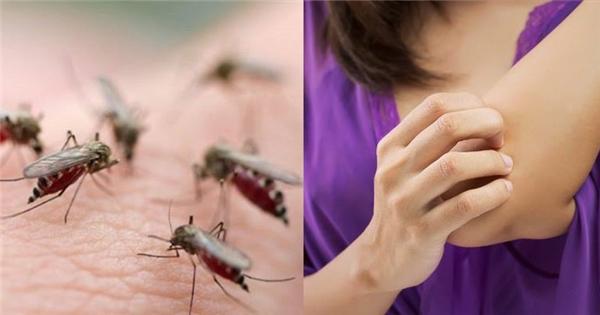 Lý do mà một số người bị muỗi đốt nhiều hơn người khác