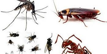 Những điều bạn chưa biết về cửa lưới chống muỗi