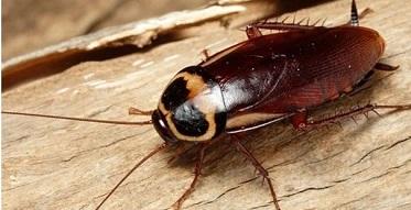 Những loài côn trùng gây hại thường xuất hiện trong nhà