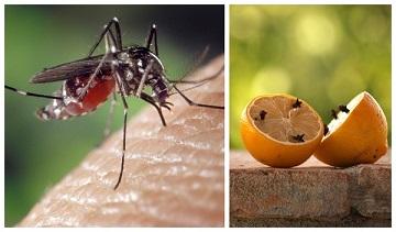 Những lưu ý để sử dụng cửa lưới chống muỗi mở lâu bền