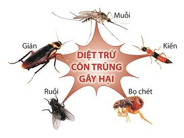 Sử dụng cửa lưới chống muỗi để đẩy lùi dịch bệnh từ côn trùng