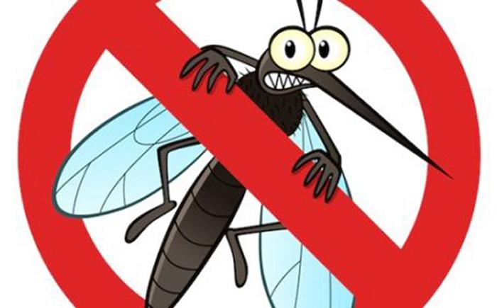 Top những cách phòng tránh và đuổi muỗi dành cho các hộ gia đình