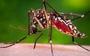 Top những căn bệnh nguy hiểm từ muỗi gây ra