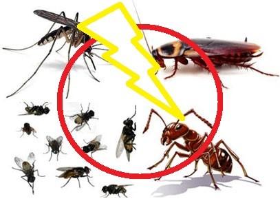 Vì sao phải sử dụng cửa lưới chống muỗi?